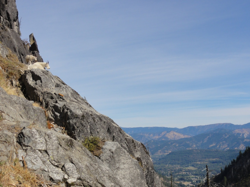 Mountain goats overlooking Leavenworth.